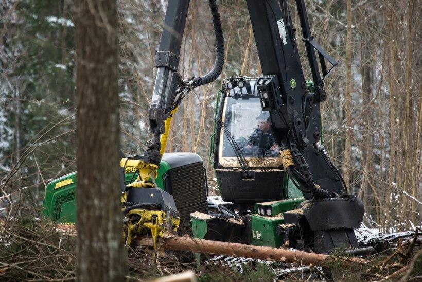 METSAMEESTE KATASTROOF: masinatega metsa ei pääse, saekaatreid ähvardab palgipõud!
