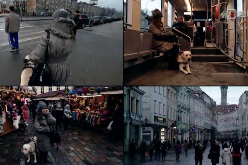 VIDEO | Vaata, kuidas liigub pime inimene koos juhtkoeraga Tallinna tänavatel