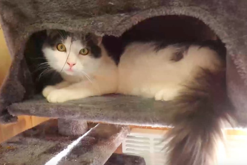 ÕHTULEHE VIDEO | Koduotsija: Varjupaiga kassipoegade toas ootab kodu kümme lustlikku kassilast!