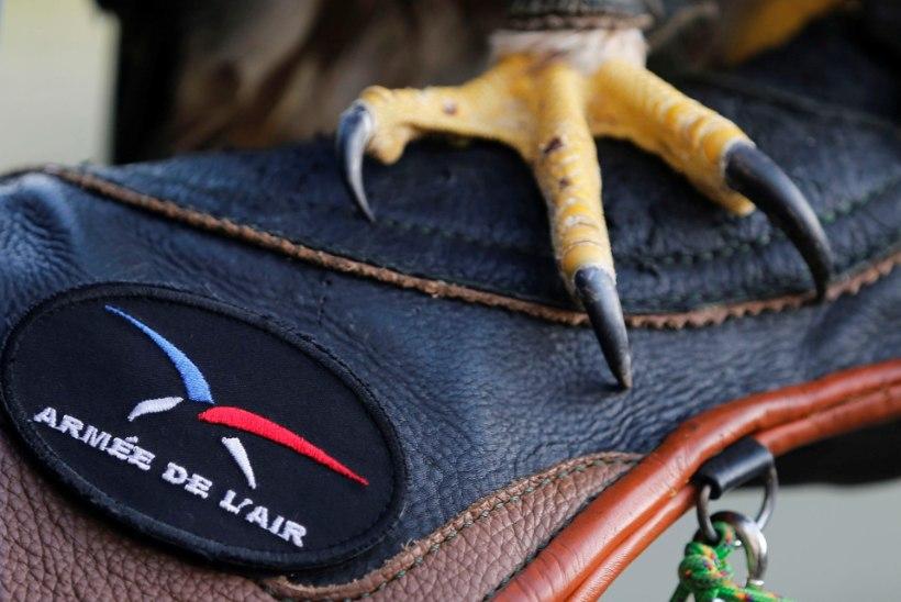 GALERII   Prantsusmaa uus relv droonivastases võitluses – kotkad