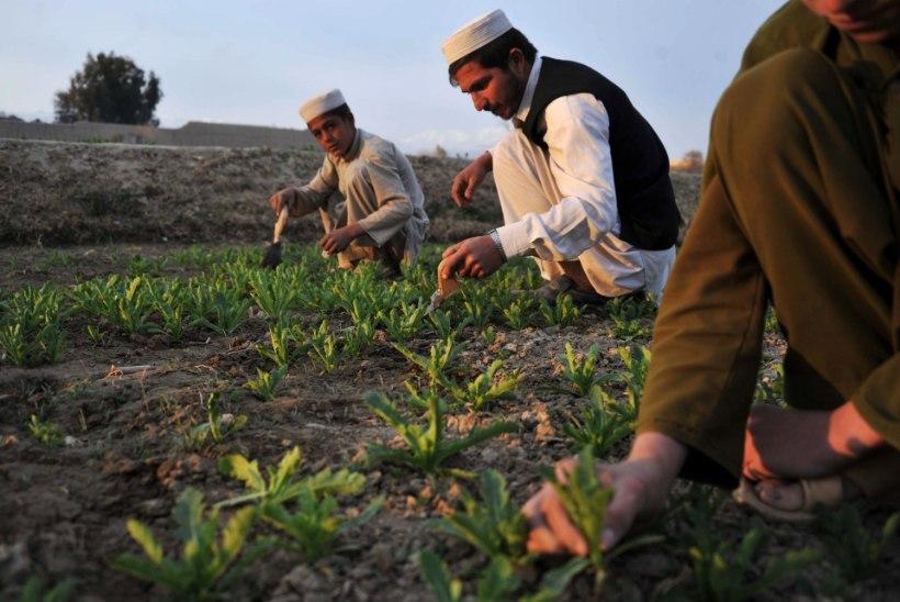 Afganistanis rööviti 52 talumeest