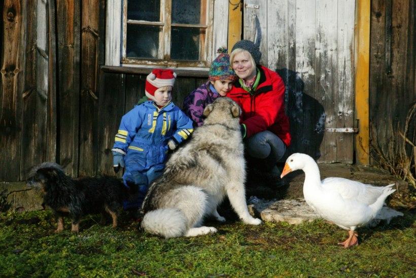 MÄLUMÄNG | Heidi Hanso ja tema suur pere