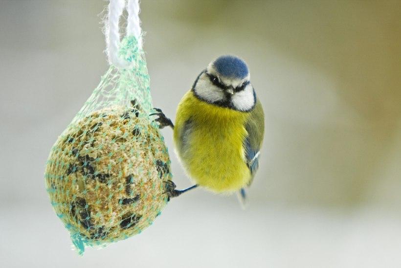 Kas linnuvaatlus teeb õnnelikuks?