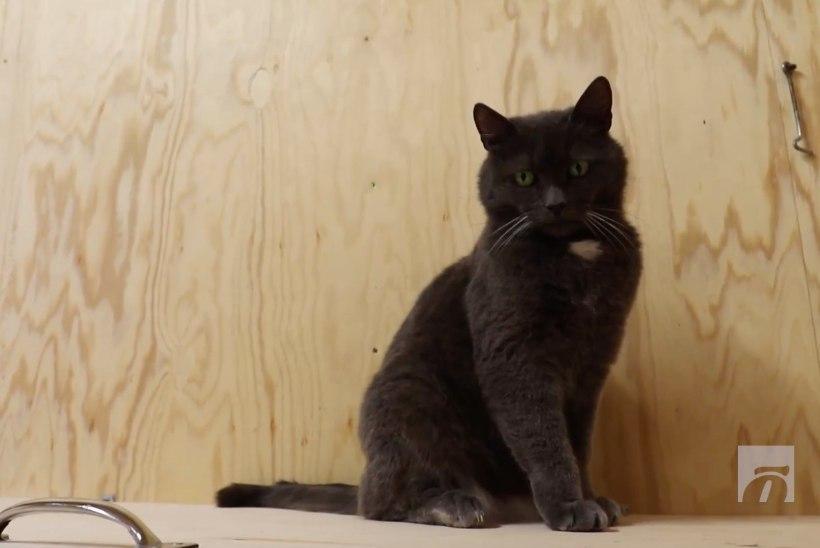 ÕHTULEHE VIDEO   Koduotsija: Liilian ootab õiget inimest, kes ta südame avaks