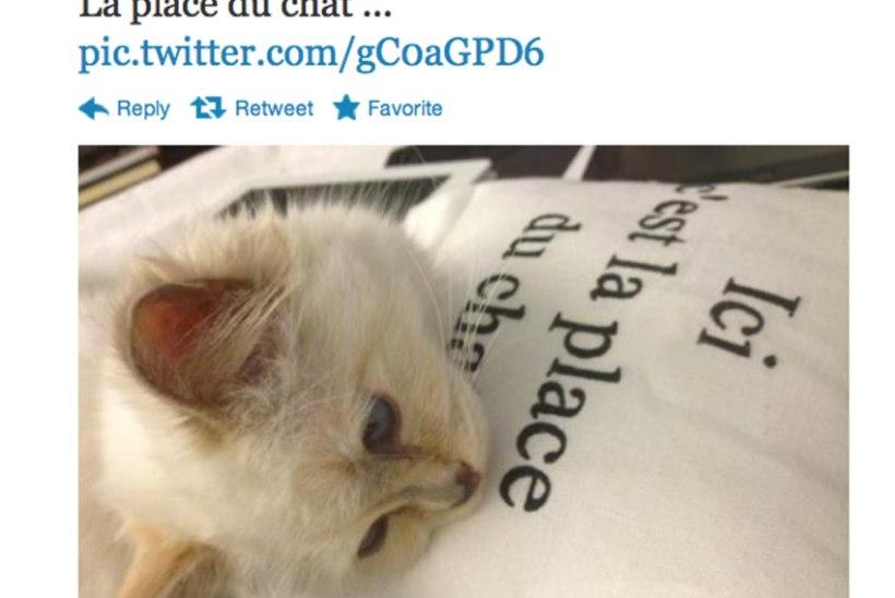 Fännidel on nüüd võimalik osta endale Karl Lagerfeldi kass!