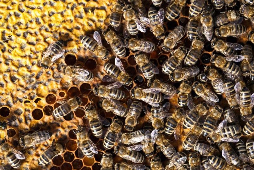 Florida rand muutus mesilaste surnuaiaks