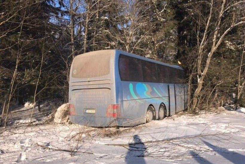 Eesti buss põrutas Venemaal teelt välja, otse vastu puud