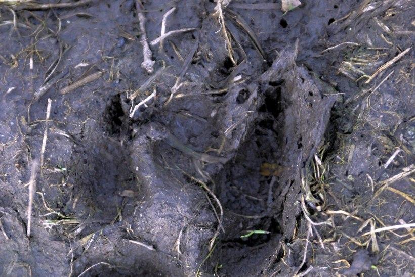 Hundid murdsid Tallinna külje all poni