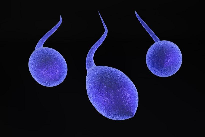 INIMKONNA LÕPP LÄHENEB? Spermatosoidide kogus on väiksem kui eales varem