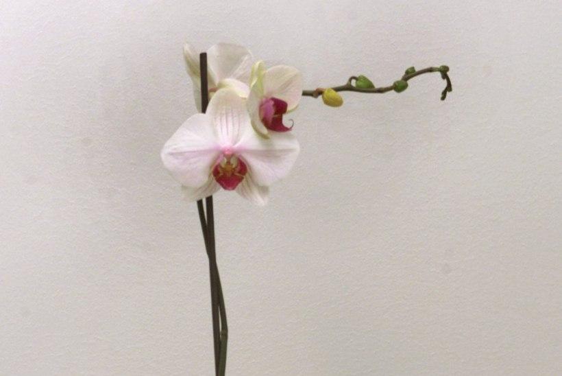 Kevad – aeg toalilled ümber istutada
