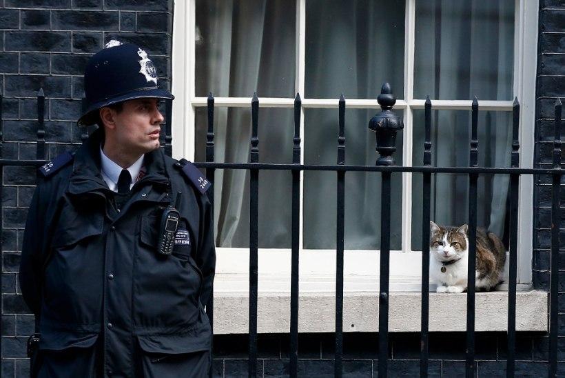 Suurbritannia valitsushoones elav kass lööb ajakirjanduses pea sama palju laineid kui Theresa May