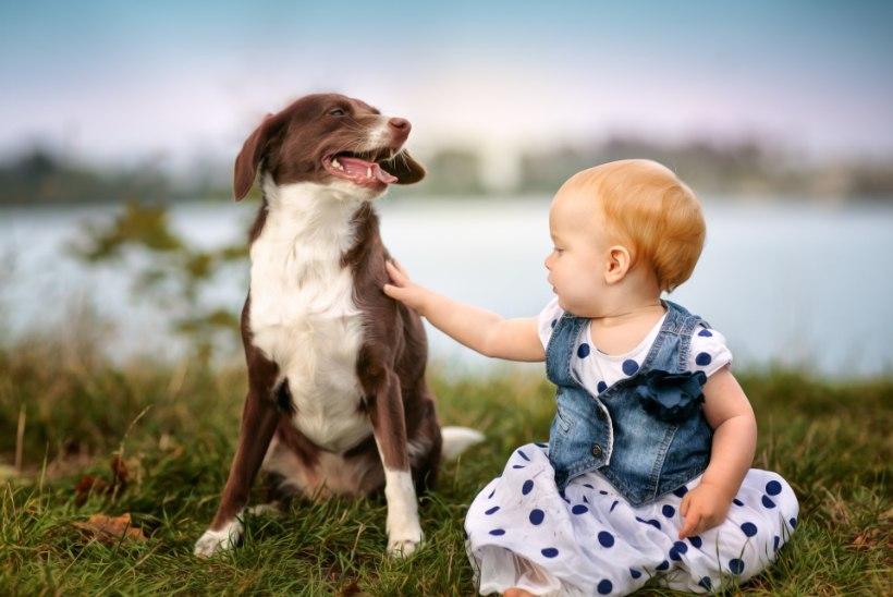 Koerad ja väikelapsed mõtlevad sarnaselt