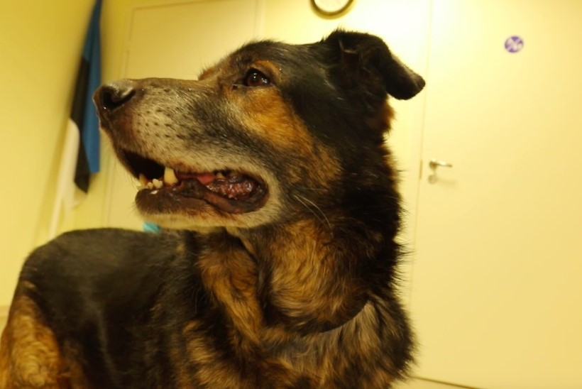 ÕHTULEHE VIDEO | KODUOTSIJA: leebe iseloomuga eakas koer Robi otsib rahulikku omanikku