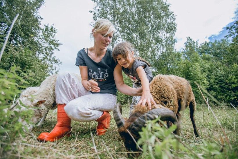 Uudiseid Heidi Hansolt: Pajuvärava talus sündis tõeline ime!