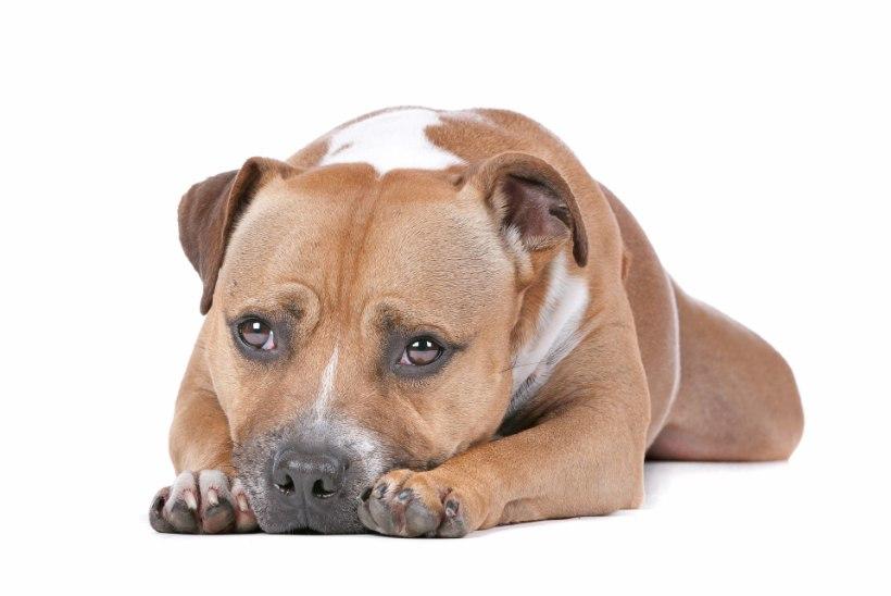 BBC-le intervjuud andnud mehe koer murdis omaniku kaamera ees maha