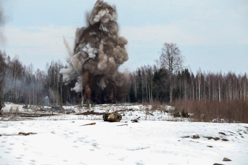 Maamiin – põrguaia kibedaim vili