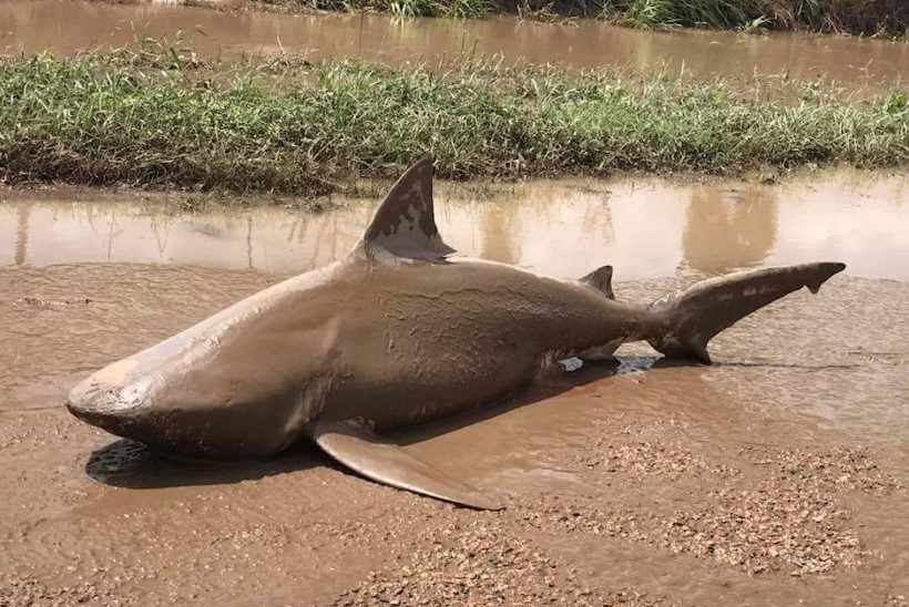FOTOD | Austraalias lebas keset teed hai
