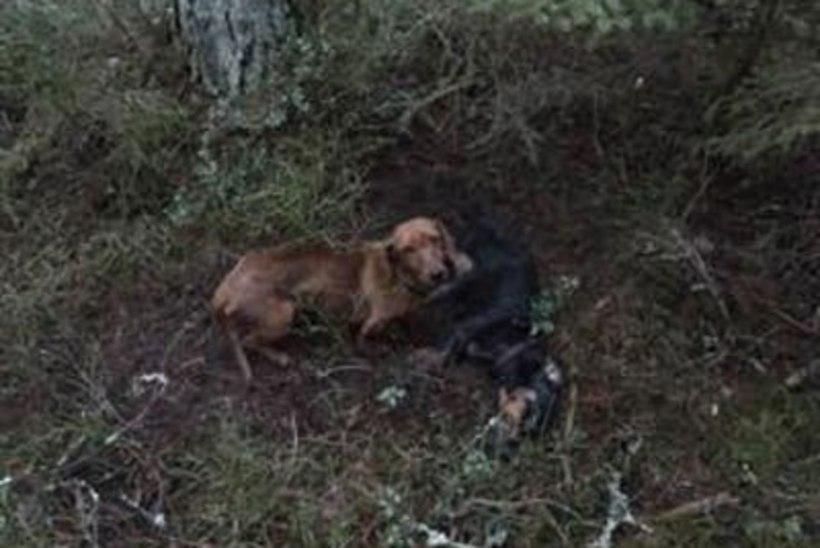 Jalutaja leidis Vääna metsast kaks väikest taksi, neist ühe surnuna