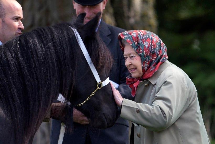 90aastane Elizabeth II kappab endiselt hobusel ringi - ja veel kiivrita!
