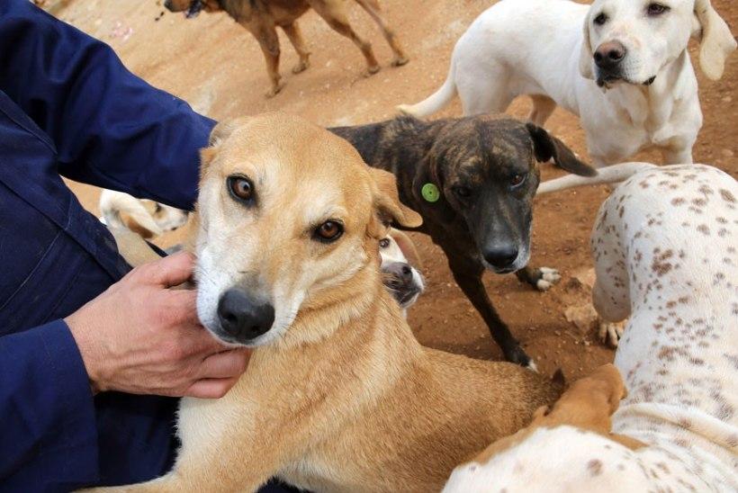 Ravile viidud naise ühetoalisest korterist leiti 26 koera