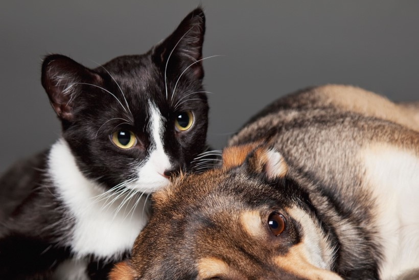 Kassi ja koera maailm: värvivaesem, kuid mitte mustvalge
