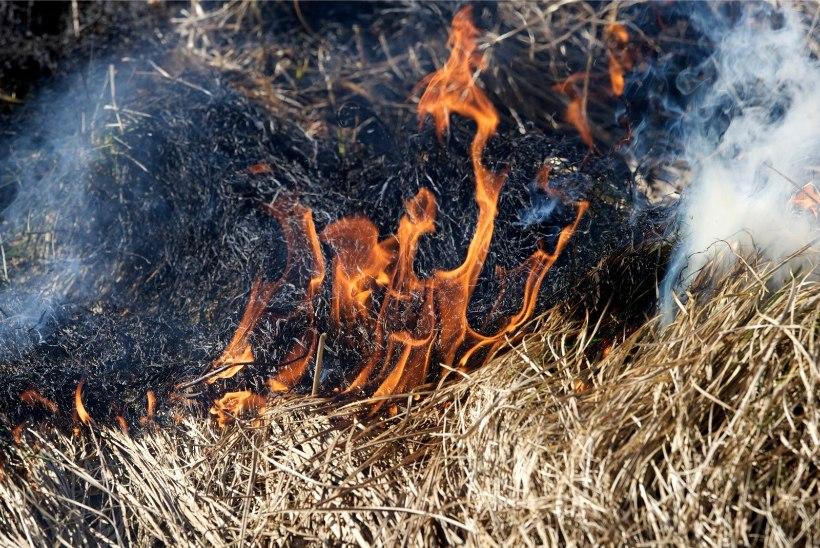 Eestimaa Loomakaitse Liit palub: ärge põletage kulu ja loomi!