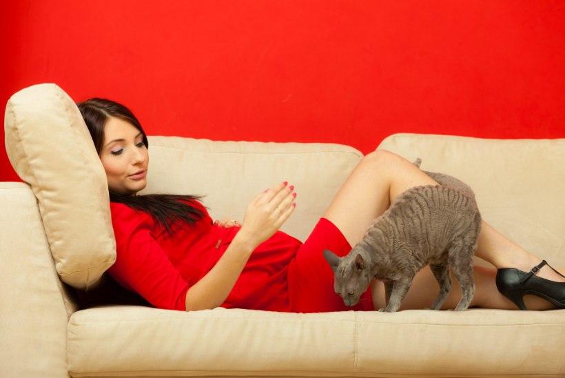 Kuidas lemmikloom su rasedust mõjutada võib