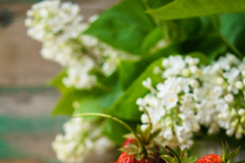 Kasvata poemaasikast maasikataimed