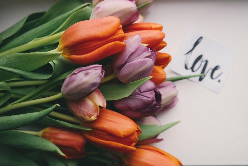 Häid nippe, kuidas tagada lilledele pikem eluiga