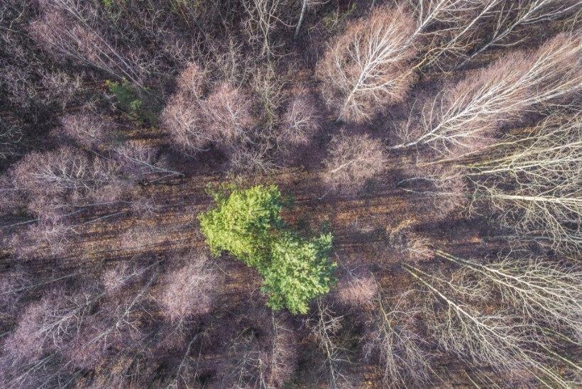Äärmuslikumad looduskaitsjad: ökoterrorism ja seks