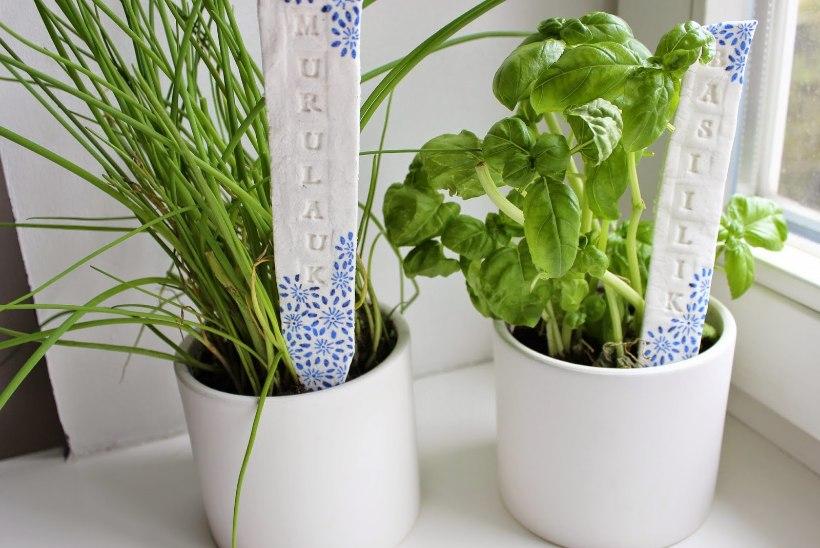 Tee soodatainast taimesildid