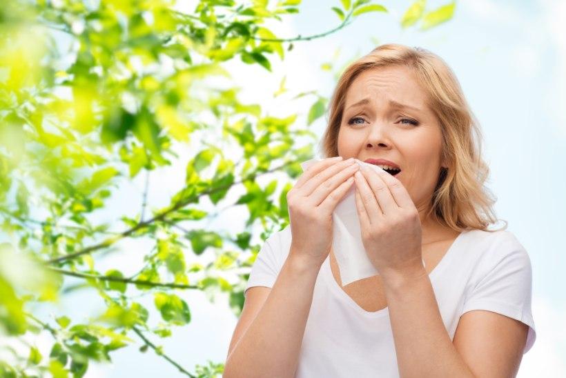 Kuidas eristada allergilist nohu tavalisest külmetusviirusega kaasnevast?