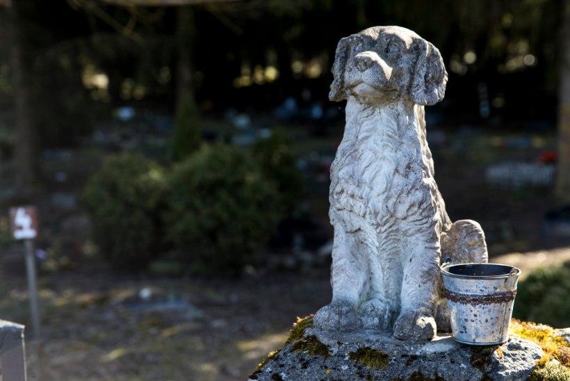 Loomakalmistu, tuhastamine või prügikast? Kuhu jõuab surnud lemmikloom?