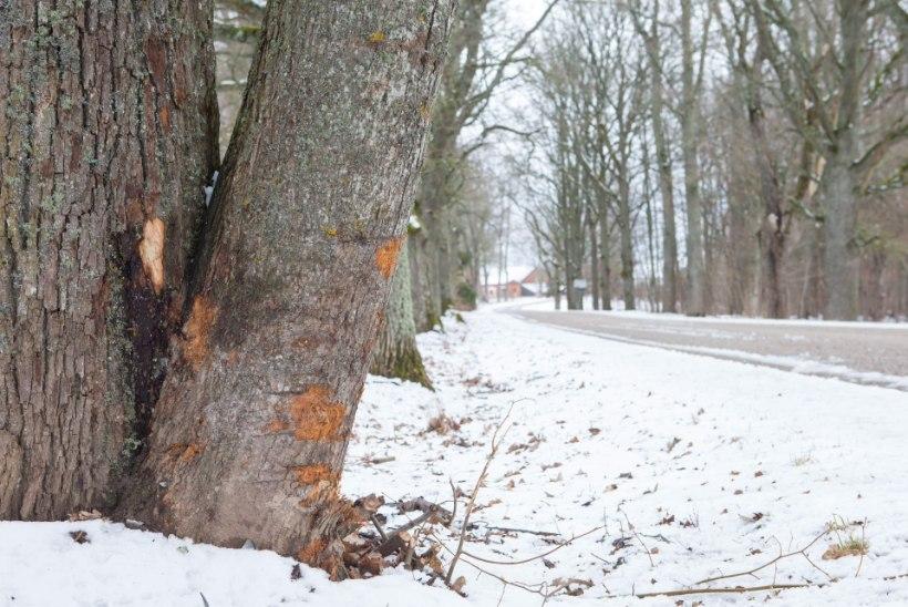 Pere kutsus purjuspäi sünnipäevalauast rooli läinud pojale politsei, aga nooruk jõudis vastu puud kihutada