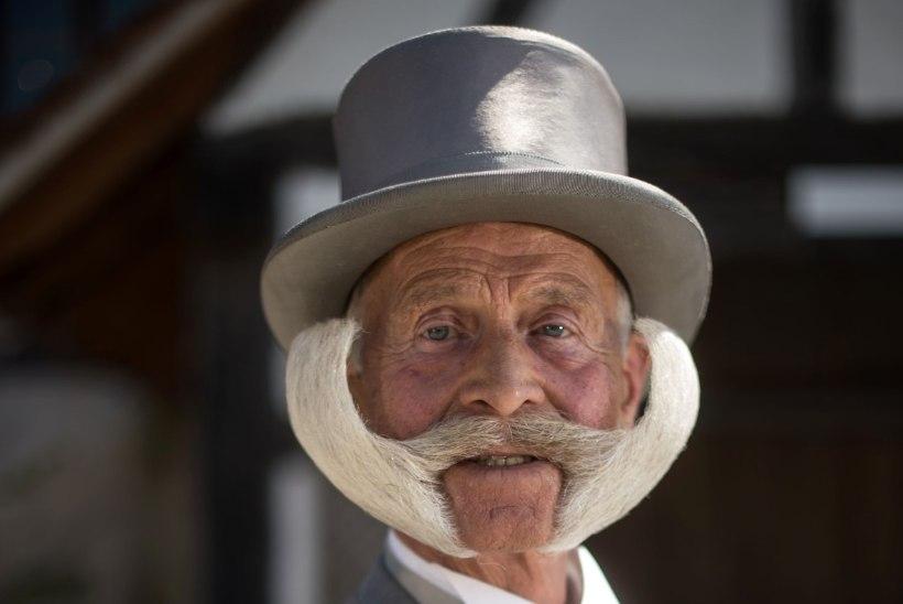 GALERII | VÕIMSAD HABEMED: Prantsusmaal toimus habeme- ja vuntsivõistlus