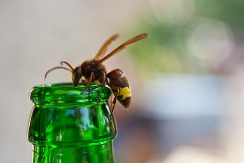 Õpetus: peleta putukad looduslikult