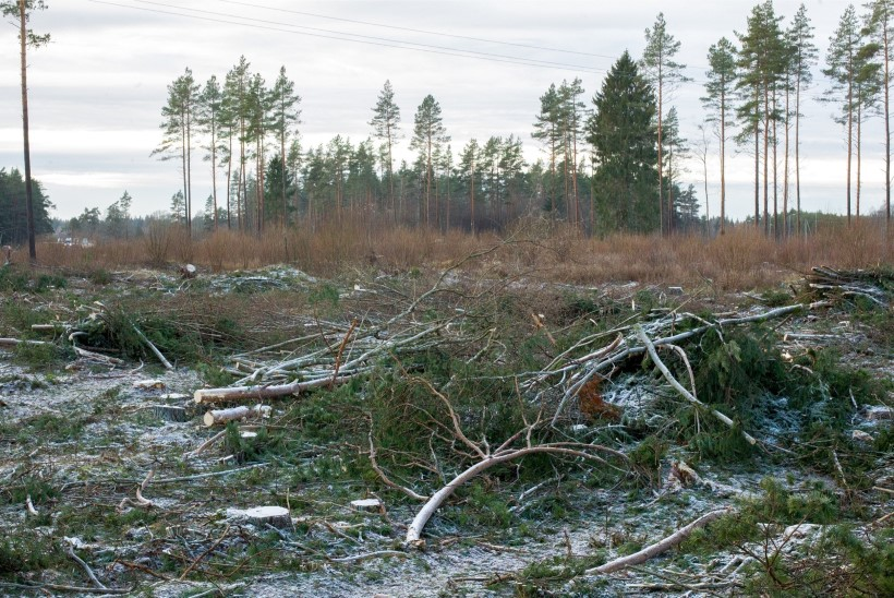Valitsus sai õiguse peatada metsaraie