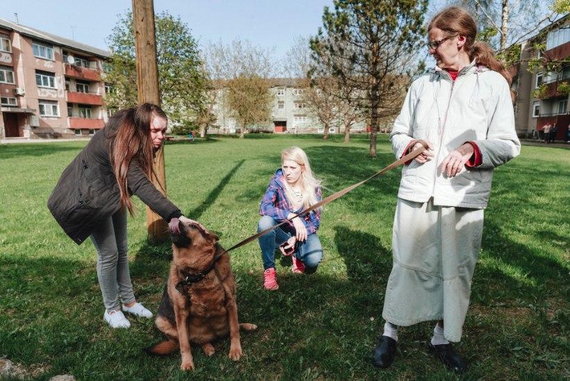 ÕHTULEHE VIDEO JA FOTOD | TALUMATU JULMUS: loomasõbrad päästsid tänaval lohistatud koera perenaise käest