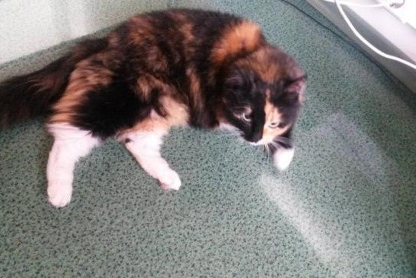 Põlvamaa naine sai kassi hülgamise eest kriminaalkaristuse