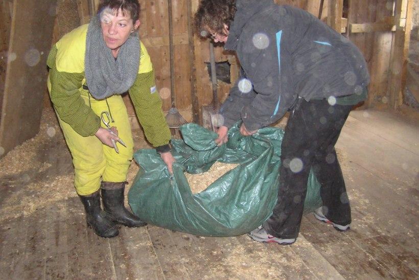 PLAHVATUSOHTLIK: Kati Saara Vatmann osales talgutel, kus leiti dünamiiti
