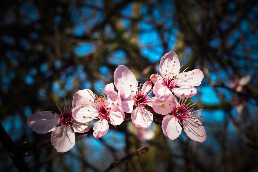 Täielik õpetus: kuidas lõigata puud ja põõsad ilusaks