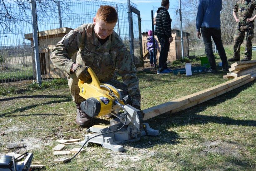 FOTOD | Briti sõdurid käisid loomade varjupaigas talgutel
