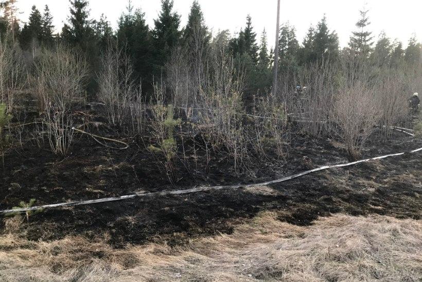 FOTOD | Raplamaal puhkes metsapõleng