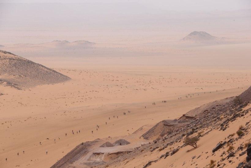 Sahara kõrbes suri 44 inimest janusse