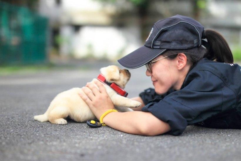 KUTSAVIDEO | Maailma kõige nunnum politseinik töötab Taiwani saarel