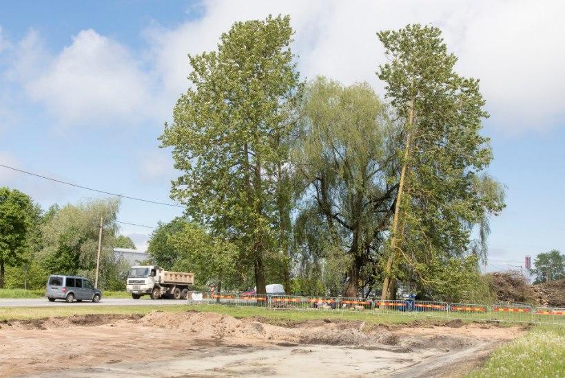 Pajukaitsjate survel projekti muutmine maksaks 1,5 miljonit