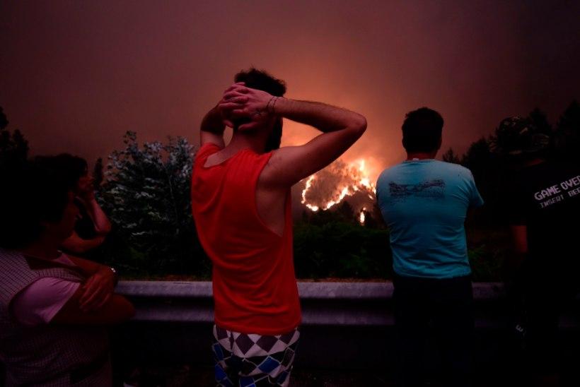 VIDEO JA FOTOD   Kurvad kaadrid Portugali metsapõlengute tagajärgedest