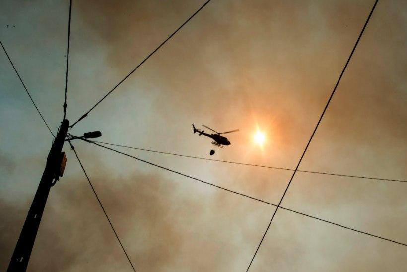 VIDEO JA FOTOD | Kurvad kaadrid Portugali metsapõlengute tagajärgedest