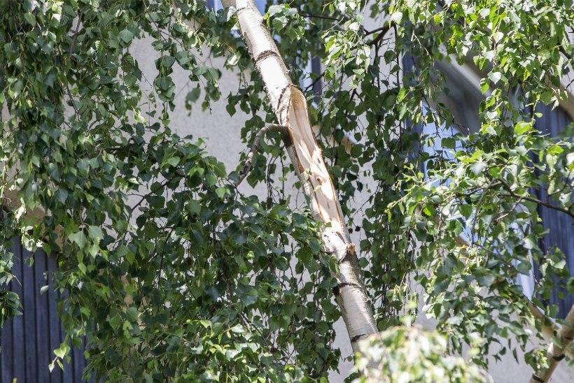 """Korrusmaja aknast alla kukkunud mehe naaber: """"Nägin viienda korruse aknast paljast peput!"""""""