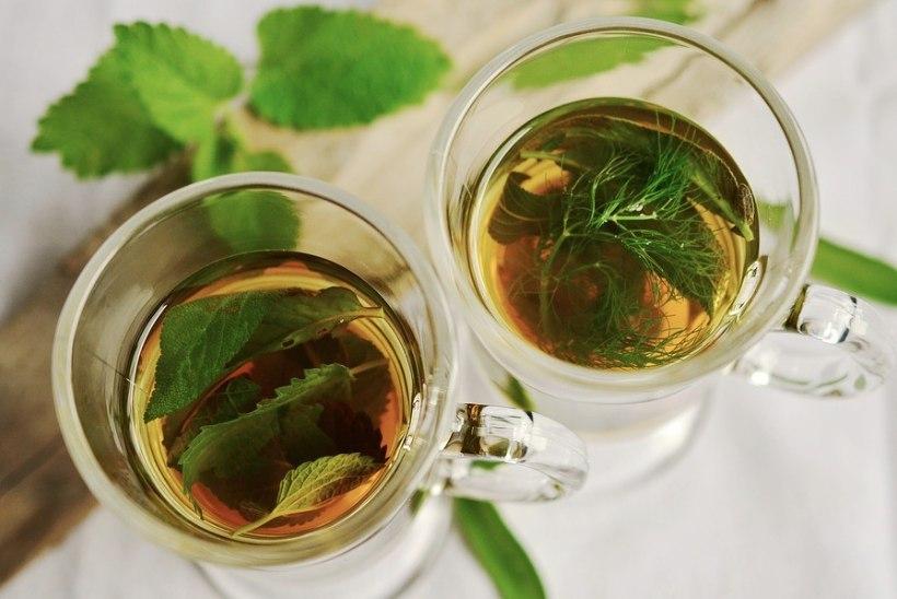 Piparmünt - universaalne taim nii valuvaigistamiseks kui ka söögiisu vähendamiseks